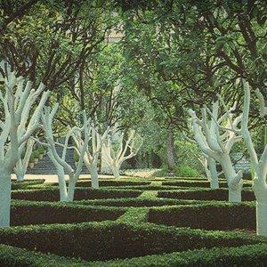 Навіщо фарбують навесні дерева